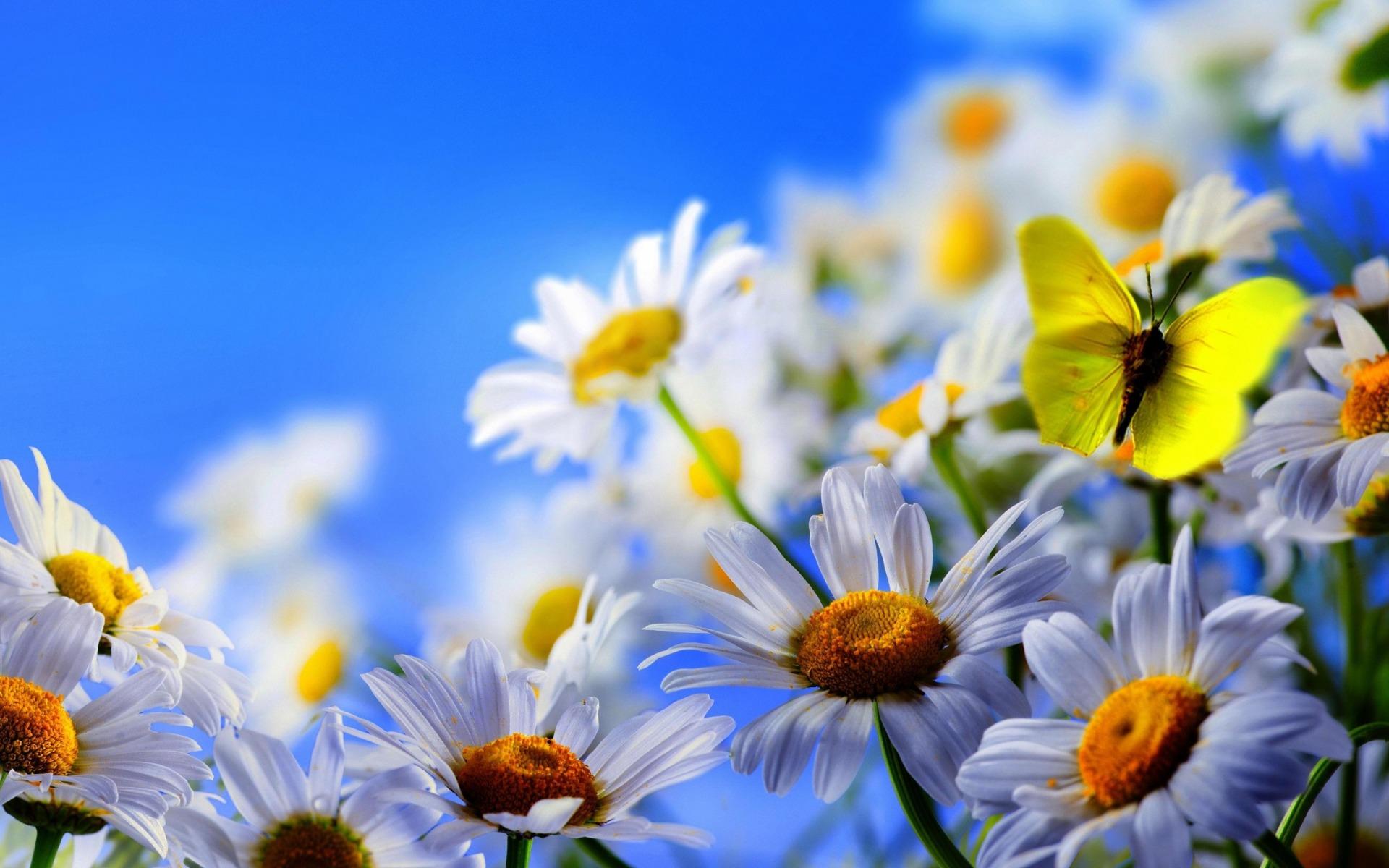 1920x1200_flowers_1436688541
